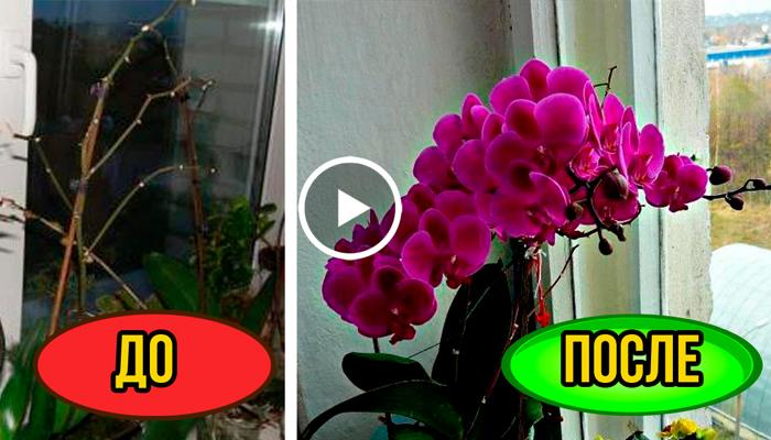 Орхидея уход за растением в домашних условиях